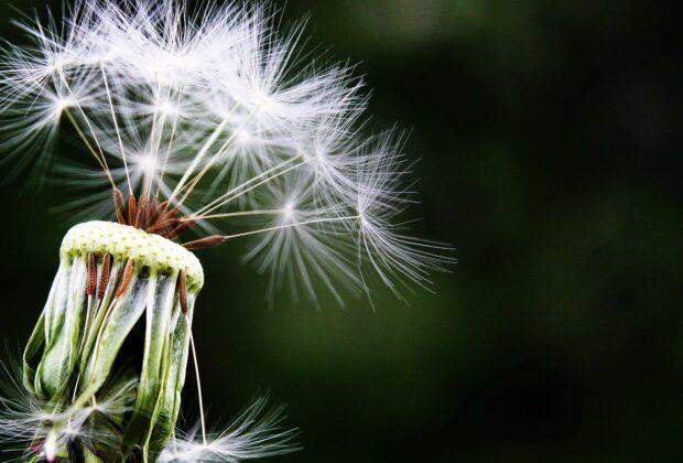 Czy można ustrzec się przed alergią